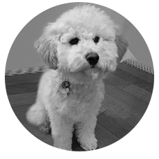 Rosie, eMail Marketing Director of Cuddles